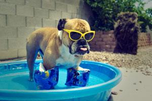 mit dem Hund in den Urlaub - 5 nützliche Tipps